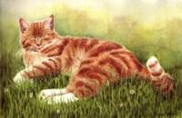 Sammy In Grass Fine Art Print