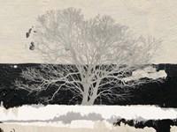 Silver Tree Fine Art Print