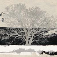 Silver Tree (detail) Fine Art Print