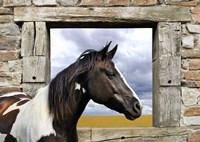 Painted Horse Fine Art Print