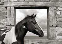 Painted Horse (BW) Fine Art Print