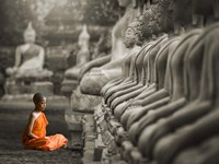 Young Buddhist Monk Praying, Thailand (BW) Framed Print