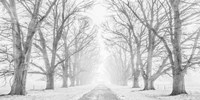 Tree Lined Road in the Snow Fine Art Print