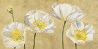 Poppies on Gold Fine Art Print