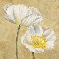 Poppies on Gold II Fine Art Print