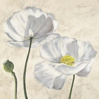 Poppies in White I Fine Art Print