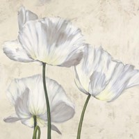 Poppies in White II Fine Art Print