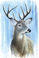 Buck Fine Art Print