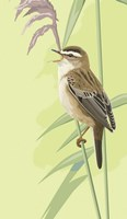 Singing Sedge Warbler Fine Art Print