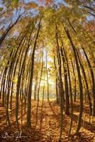 Autumn In The Woods Fine Art Print