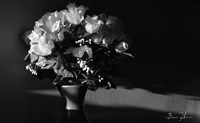 Flowers In Light Fine Art Print