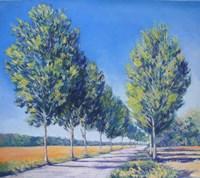 Picardy Poplars IV Fine Art Print