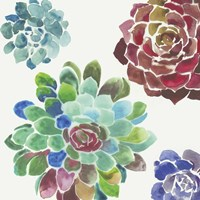 Water Succulents I Fine Art Print