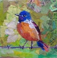Spring Robin Fine Art Print