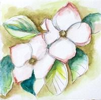 Watercolor Dogwood Fine Art Print