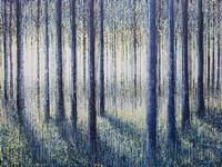 Spring Light Through Forest Trees Fine Art Print