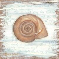 Ocean Snail Framed Print