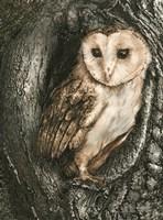 Barn Owl Roost Fine Art Print