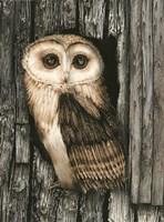 Owl Sentry Fine Art Print