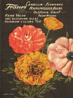 California Giant Ranunculus Fine Art Print