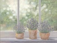 Lavender Pots Fine Art Print
