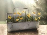 Daffodil Tin Fine Art Print