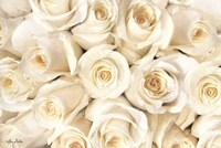 Top View - White Roses Fine Art Print