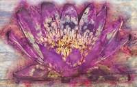 Lotus 2 Fine Art Print