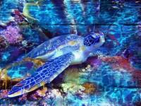 Turtle Fine Art Print