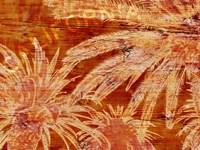 Orange Palm Grove Fine Art Print
