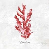 Red Sea Coral Fine Art Print