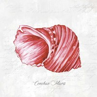 Red Seashell Fine Art Print