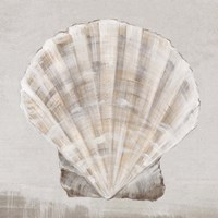 Neutral Shells II Framed Print