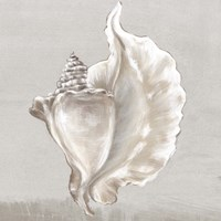 Neutral Shells III Fine Art Print