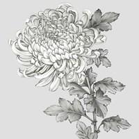 Grey Botanical I Framed Print