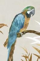 Blue Parrot I Fine Art Print