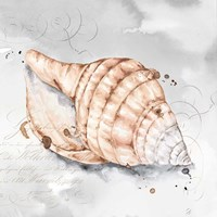Blush Shell I Fine Art Print