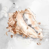 Blush Shell III Fine Art Print