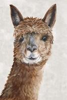Suri Alpaca II Fine Art Print