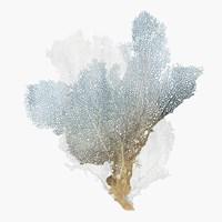Delicate Coral III Fine Art Print