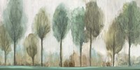 Tall Trees Fine Art Print