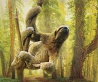 Sun Soaker Sloth Fine Art Print