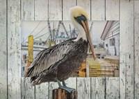 Pelican Pride Fine Art Print