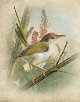 Morning Bird Fine Art Print