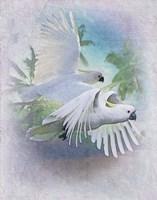 Cockatoo Blues Fine Art Print