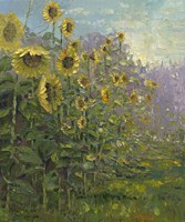Sunflowers Sunrise Fine Art Print