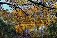 Clove Lakes Park in Autumn A Fine Art Print