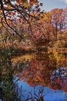Clove Lakes Park in Autumn B Fine Art Print