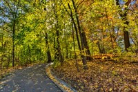 Clove Lakes Park in Autumn D Fine Art Print