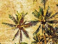 Palms 2 Fine Art Print